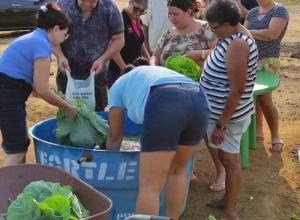 Cidade de Crixás realizou a primeira entrega de hortaliças do projeto social Horta Comunitária