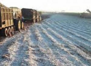 Brasil tem desastre agrícola por geada e seca