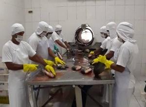 Tocantins conta com primeiro entreposto de pescado habilitado no serviço de inspeção estadual